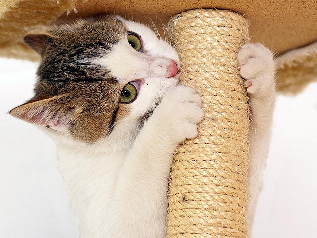 How to Choose a Scratching Post