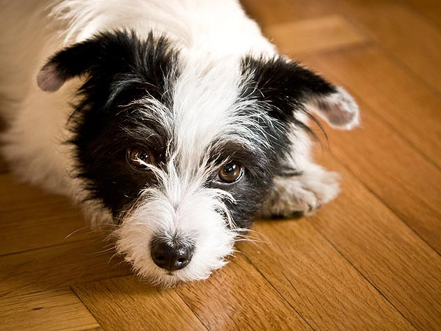 How Do I Get My Dog to Take a Pill?