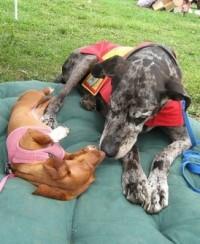 Great Dane and Dachshund cuddling on a green cushion