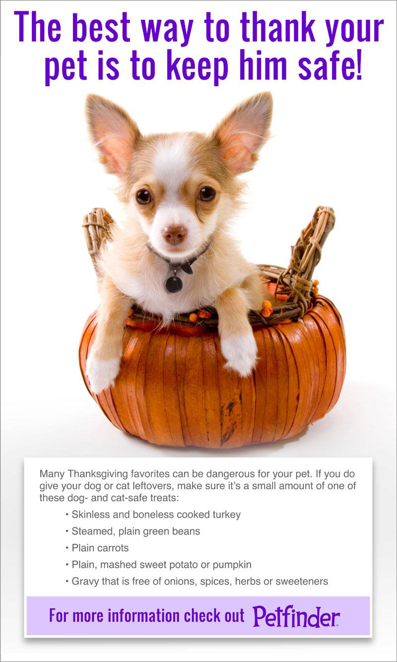 Food To Give A Small Dog With An Upset Stomach