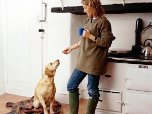 People food safe for pets