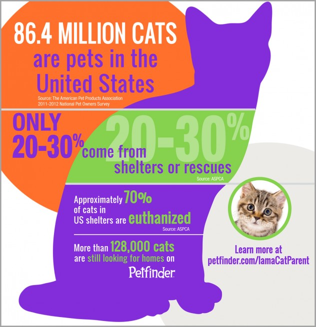 Infographic showing the state of cats in the United States