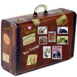 pet travel suitcase