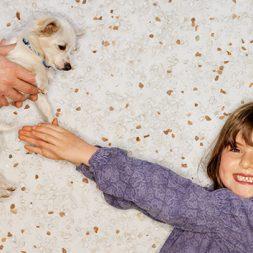 Pet adoption, puppy adoption