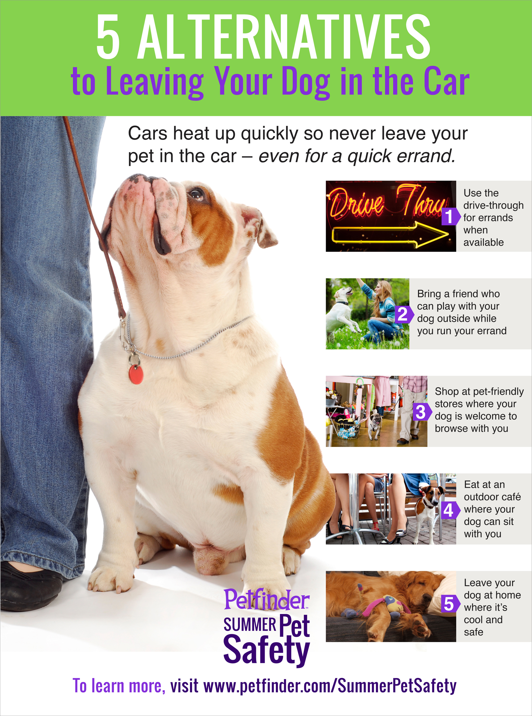 infographic 5 fun alternatives to leaving your dog in the car petfinder. Black Bedroom Furniture Sets. Home Design Ideas