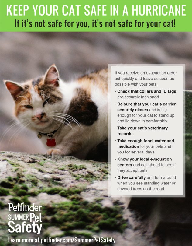 hurricane tips for cats