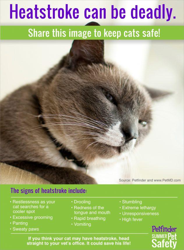 cat cremation cost