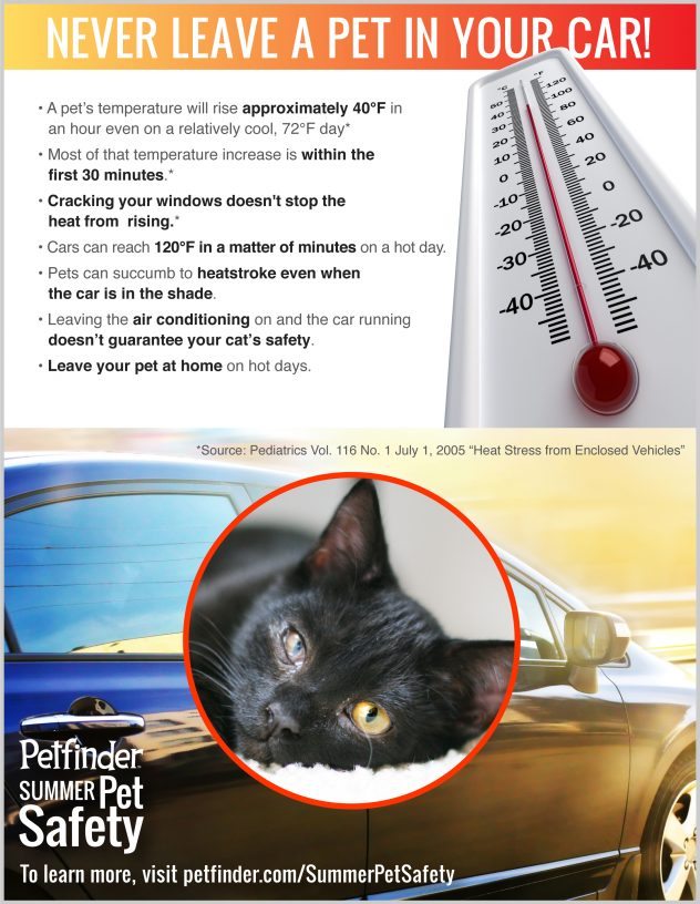 never leave a pet in a hot car poster