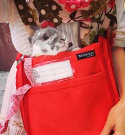 Bunny on errand