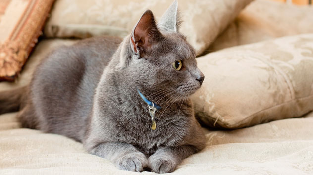 cat-bed-147975381_632x353