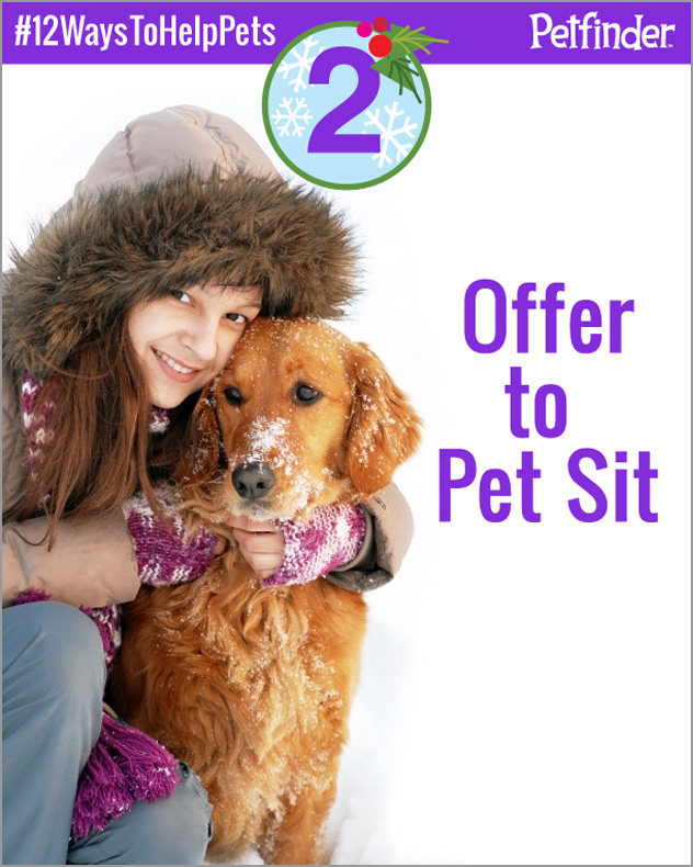 dog-12-ways-to-help-pets-day-2