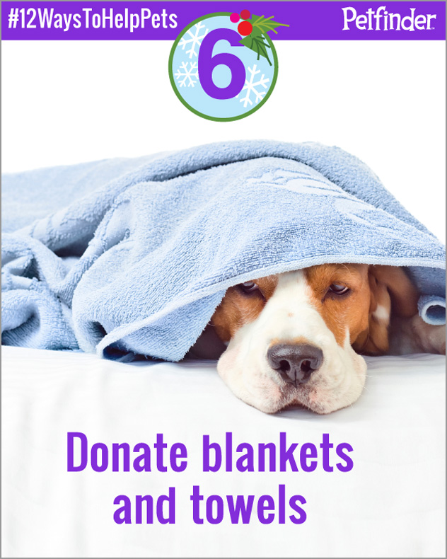 dog-12-ways-to-help-pets-day-6