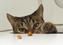 new-food-tips-cat