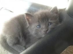 Tidy Cats Kitten