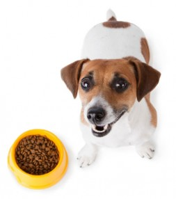 Puppy with food