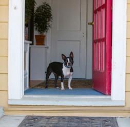 Help your dog build impulse control.