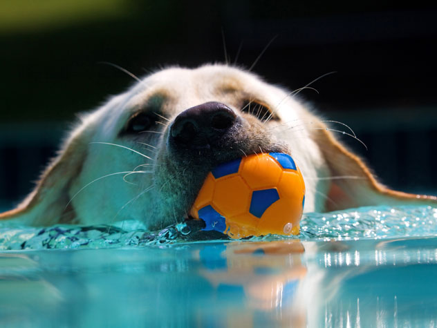 Dog swimming in the water.