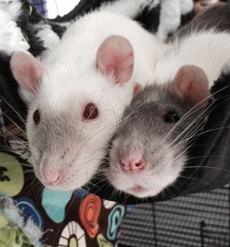 Primrose (left) snuggles with one of her chums.
