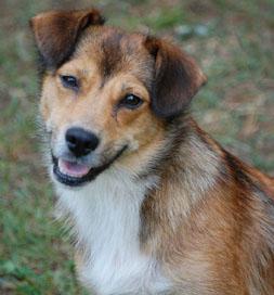 dog-adoption-corgi-rosie-conover
