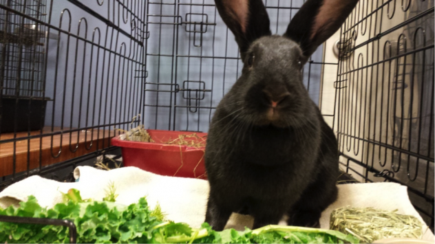 Zenon loves her veggies! She is available for adoption from Almost Home Humane Society in Lafayette, IN. (https://www.petfinder.com/petdetail/31001562/)