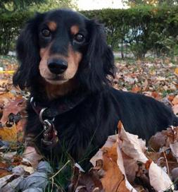 Talia still looks like a puppy.