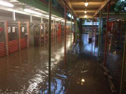 Flooded kennels at Austin Pets Alive!
