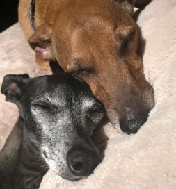 Samson (top) and Fudgems nap together.