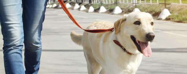 big-dog-header