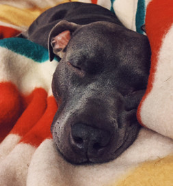 A little snooze is always refreshing.