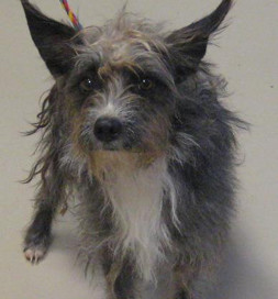 Scrappy came to the shelter full of dreadlocks and fears.