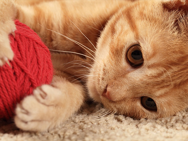 5-pet-safety-tips-to-always-remember