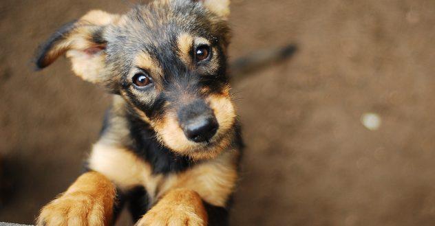 Hopeful puppy at Shelter