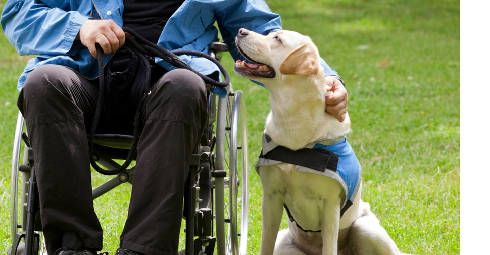 person in a wheelchair petting a dog