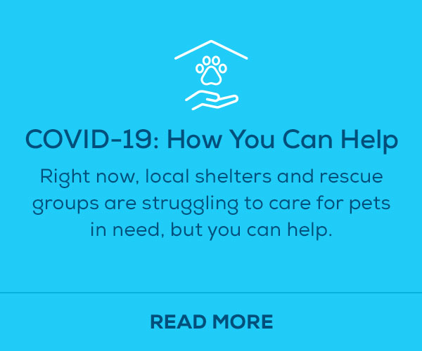 covid-19 how you can help